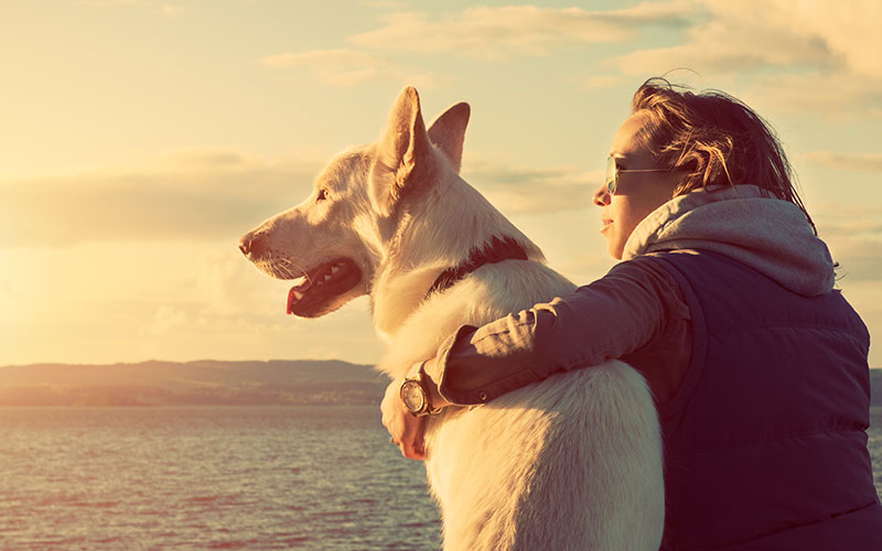 Können Hunde Coronavirus Bekommen